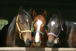 5 Ways for Equine to Prevent Dehydration During Summer