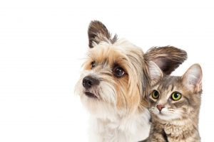 Dog and Cat together | Pet Food & Supplies available at OBFS