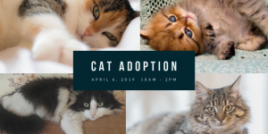 Cat Adoption Day @ Ocala Breeders Feed and Supply - Hwy 27 Store