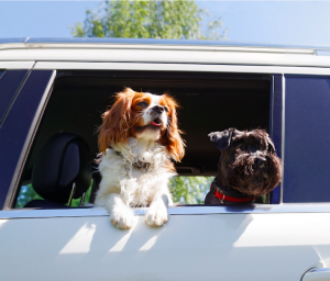 Pet Care During Travel