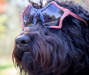 Tips For Pet And Animal Safety On July 4th