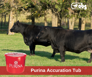 Purina Accuration Tub