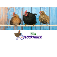 Flocktober @ Ocala Breeders Feed and Supply | Sebring | Florida | United States