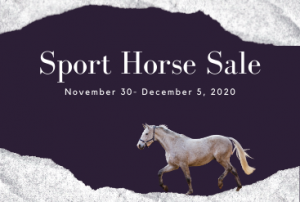 Sport Horse Sale @ Ocala Breeders Feed and Supply | Sebring | Florida | United States