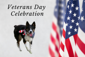 Veterans Day Celebration @ Ocala Breeders Feed and Supply